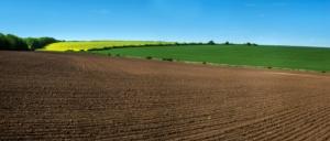 terreno-arato-paesaggio-campi-colza-agricoltura-by-pavlobaliukh-adobe-stock-750x321