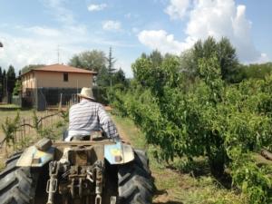 Difesa, le novità di Syngenta per la frutticoltura