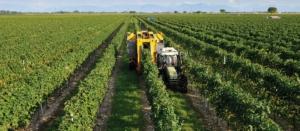 Banche dati e parametri agrometeo per la viticoltura sostenibile