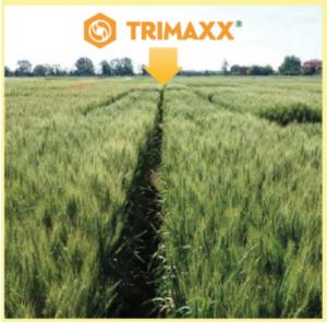 Trimaxx: tre volte il massimo