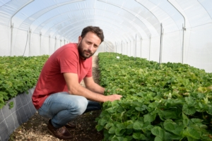 Più valore alla fragola, in tutta la filiera - Plantgest news sulle varietà di piante