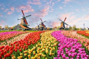 tulipani-olanda-mulini-by-olenaznakk-fotolia-750