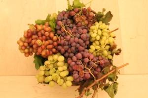 uva-da-tavola-fonte-mario-colapietra