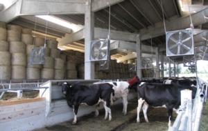 ventilazione-in-stalla-bovini-apr-2019-allevatori-top