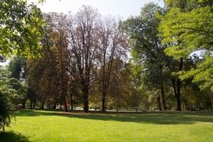 verde-pubblico-fonte-assoimpredia