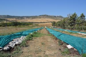 Lombricoltura da reddito: il primo passo per un'economia circolare