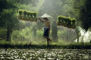 vietnam-riso-agricoltore-vietnamita-by-tong2530-fotolia-750