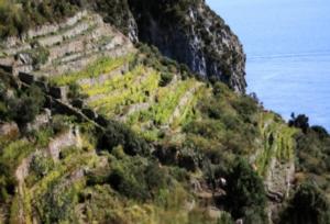 vigenti-ponza-viticoltura-eroica-by-arsial-jpg