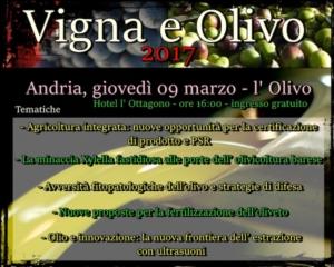 L'olivo e l'olivicoltura innovativa
