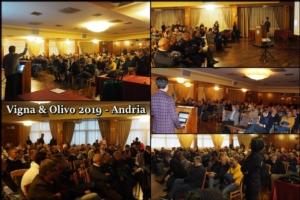 Olivo, la gestione nella filiera moderna