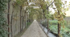 vigna-vite-vigneto-antico-donne-della-vite-evento-venezia-ott-2017-schermata-video-barbara-righini