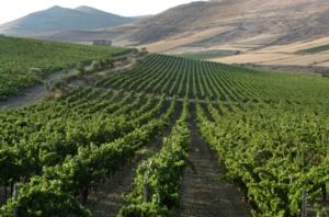 vigne-argiolas