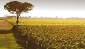 vigneti-la-delizia-albero-byladeliziacom.jpg