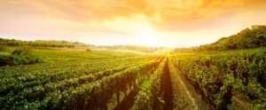 vigneti-vigneto-vigne-vigna-by-luckybusiness-adobe-stock-750x311