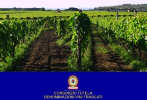 vigneto-frascati-doc-logo-by-consorzio-tutela-denominazione-vini-frascati