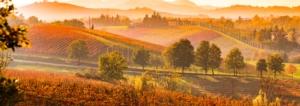 EVENTO - Non solo Lambrusco: la biodiversità viticola nel modenese - Plantgest news sulle varietà di piante