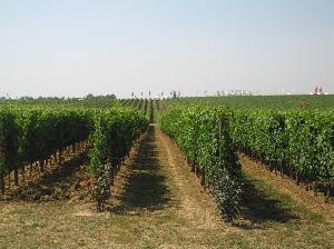 La gestione del suolo nel vigneto
