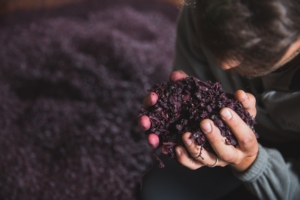 vinaccia-fonte-assodistil