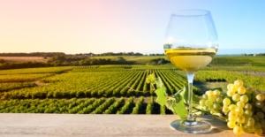vino-bianco-bicchiere-vigneto-vigna-vite-by-thierry-ryo-fotolia-750