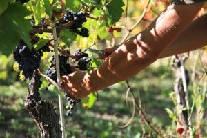vino-liberomodello-agricoltura-fonte-foto-vinoliberoit