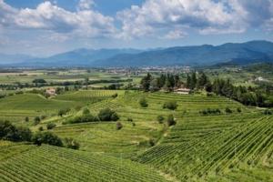 vino-vini-annata-viticola-fonte-friuli-colli-orientali-ramandolo