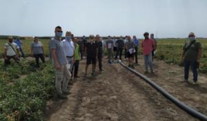 Pomodoro da industria, ieri la visita al campo di Foggia - Plantgest news sulle varietà di piante