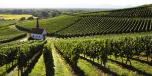 vite-montagna-viticoltura-estrema-by-wieselpixx-fotolia-750