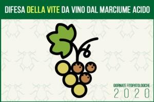 La difesa della vite da vino dal marciume acido