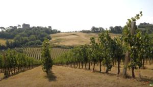 vite-viticoltura-vigneto-fonte-image-line
