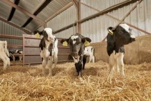 vitelli-nutreco-redazionale23122015