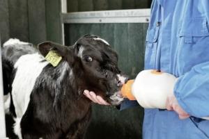 vitello-fonte-nutreco-redazionale-7-maggio-2015