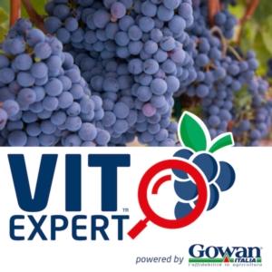 vitexpert-uva-vino-fonte-gowan