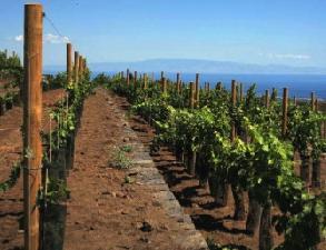 viticoltura-sicilia-irvv-byterra-sicilia