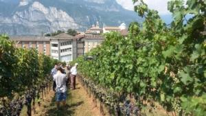 viticoltura-vigneto-weizacher-fonte-fem