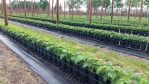 Piccoli frutti: più qualità contro la concorrenza internazionale - Plantgest news sulle varietà di piante