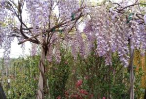 Toscana, il vivaismo riparte a domicilio - Plantgest news sulle varietà di piante