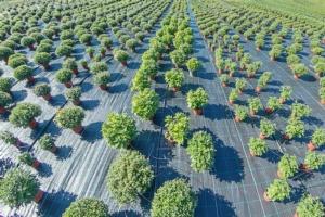 vivaio-vivaismo-piante-by-allexxandarx-adobe-stock-750x500