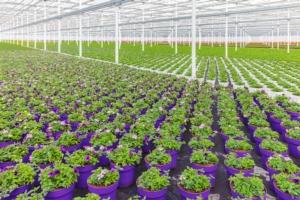 Marche, 2 milioni per il florovivaismo - Plantgest news sulle varietà di piante