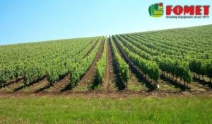 Lattuga, Fomet spa presenta le valutazioni sulla semina - Fertilgest News