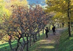vivi-il-verde-foto-di-rosella-ghedini-pubblici-giardini-20210630
