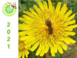 world-bee-day-2021-giornata-api-by-matteo-giusti-agronotizie-jpg