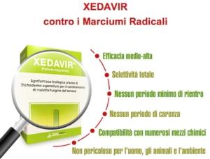 Xedavir, contro i marciumi radicali