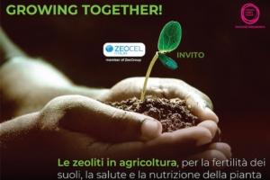 Zeoliti e agricoltura: fertilità dei suoli, salute e nutrizione della pianta - Fertilgest News