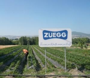 zuegg-campi-frutta-sostenibilita-2013-2014